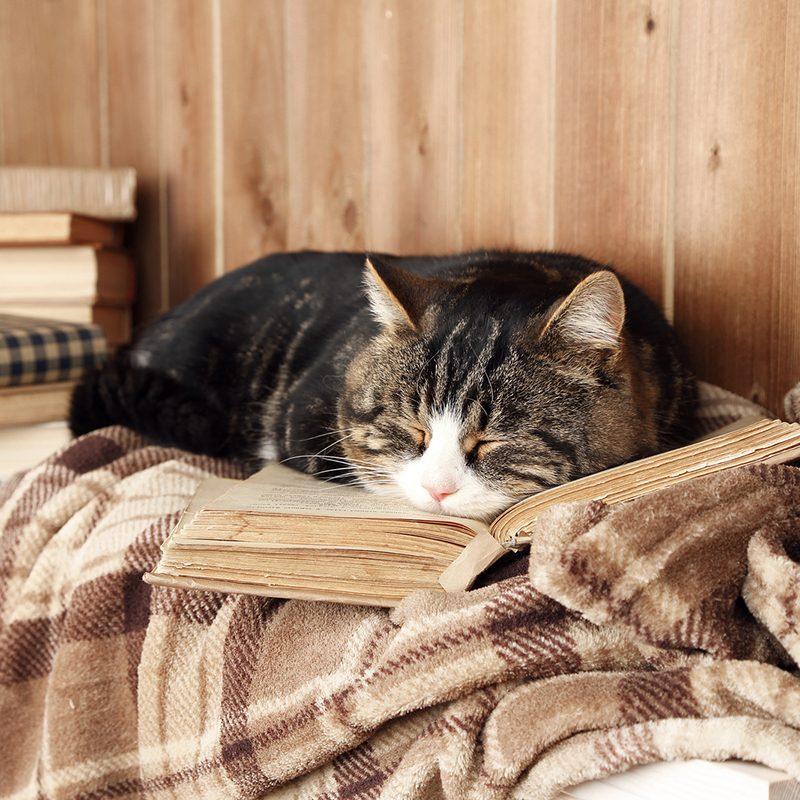 Dịch vụ chăm giữ mèo