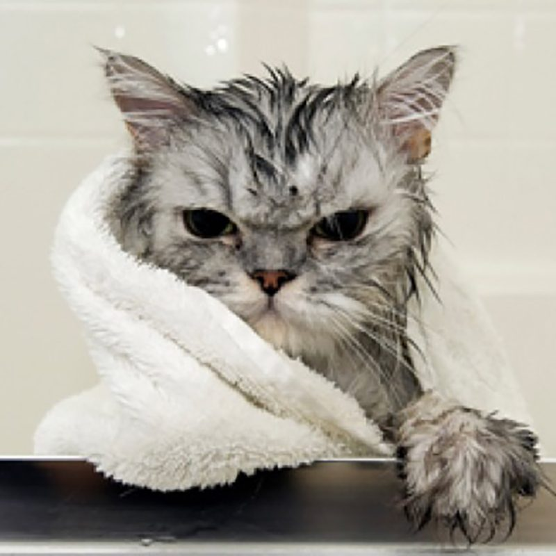 Dịch vụ tắm mèo