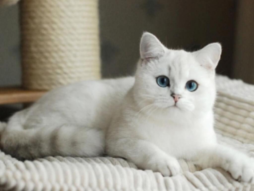 Làm thế nào để sở hữu một bé mèo mập mạp mỡ màng nhưng vẫn khoẻ mạnh?