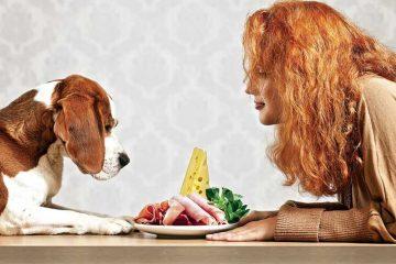 4 xu hướng chọn thức ăn cho chó 2018