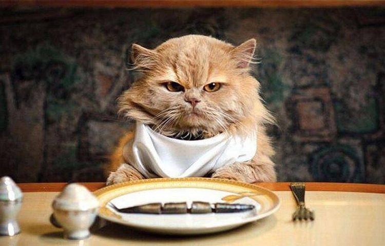 Bật mí cách chọn mua thức ăn cho mèo hợp lý nhất