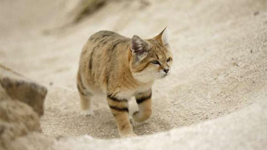 Cách mua cát vệ sinh chất lượng cho mèo