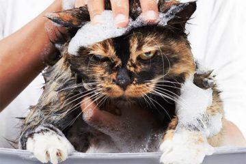 Dịch vụ tắm mèo uy tín tại Tp.HCM