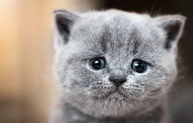 Loài mèo cũng biết khóc và nằm mơ