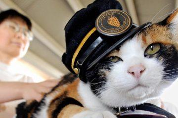 """Tama: Từ mèo hoang đến """"trưởng ga tàu"""" nổi tiếng nhất Nhật Bản"""