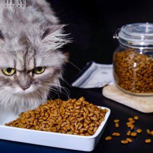 thức ăn chó mèo