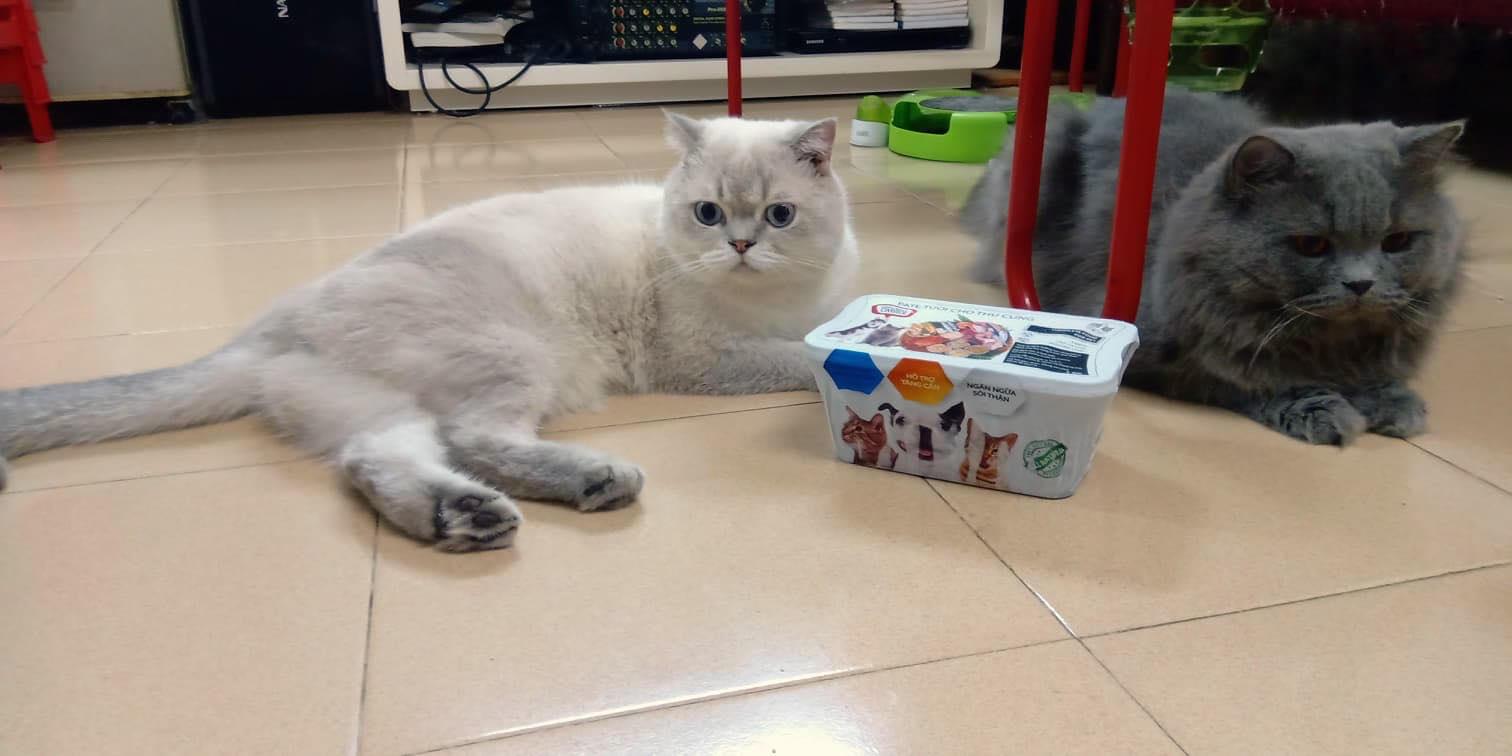 Thức ăn cho mèo mang thai