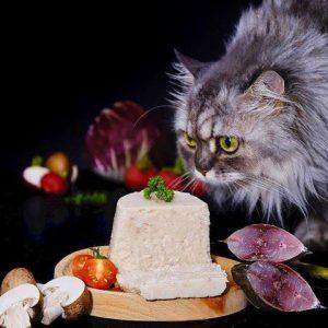 thức ăn mềm cho mèo