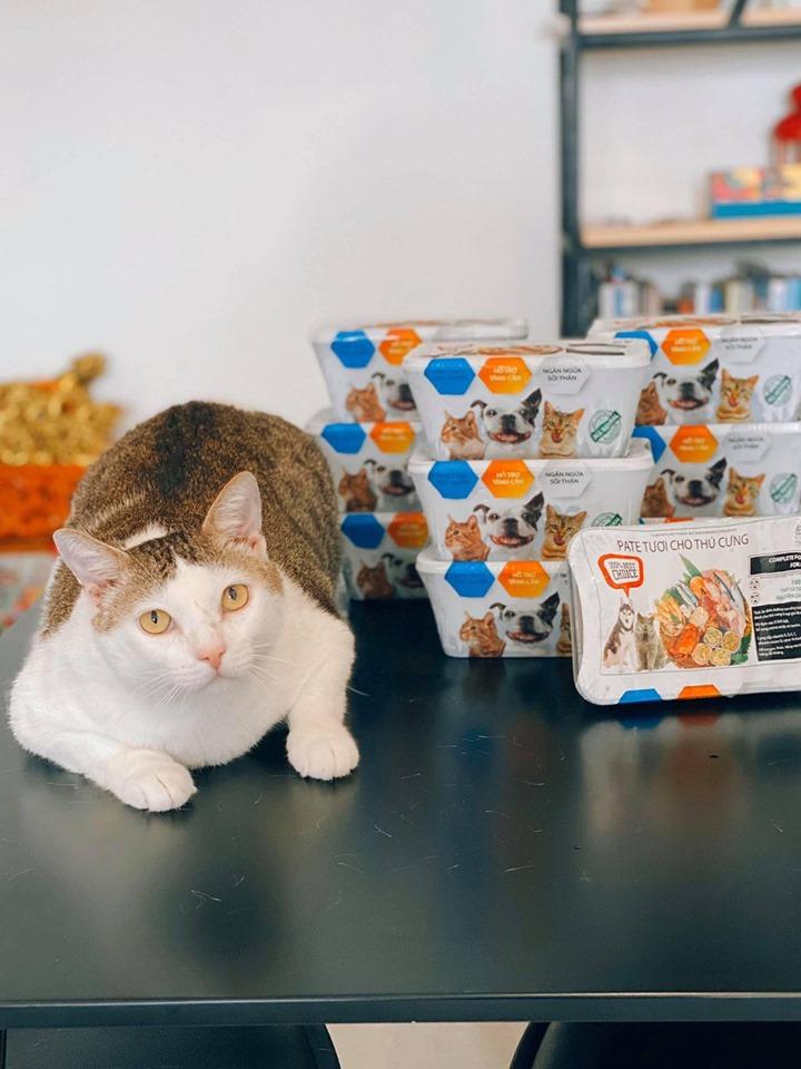 thức ăn cho mèo