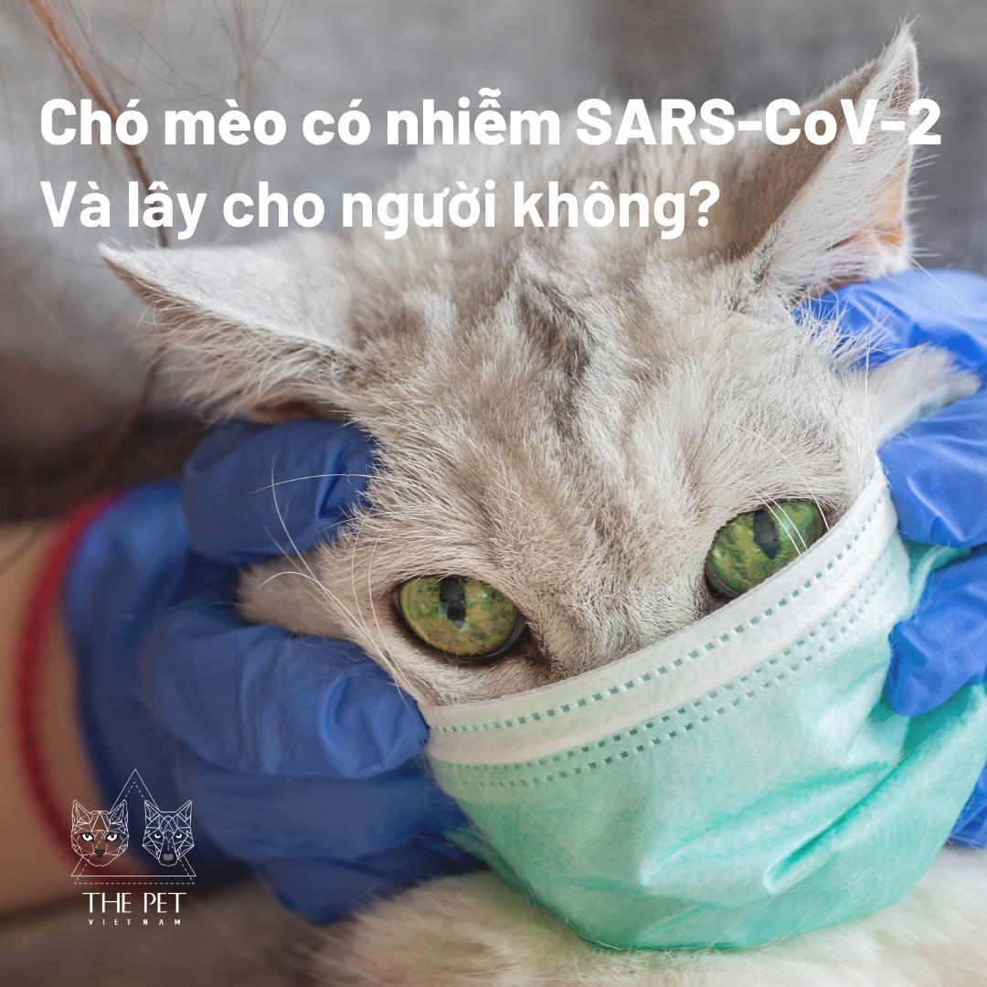 Ở nhà hoàn toàn có thể lây nhiễm COVID-19 qua chó mèo, đúng hay không?