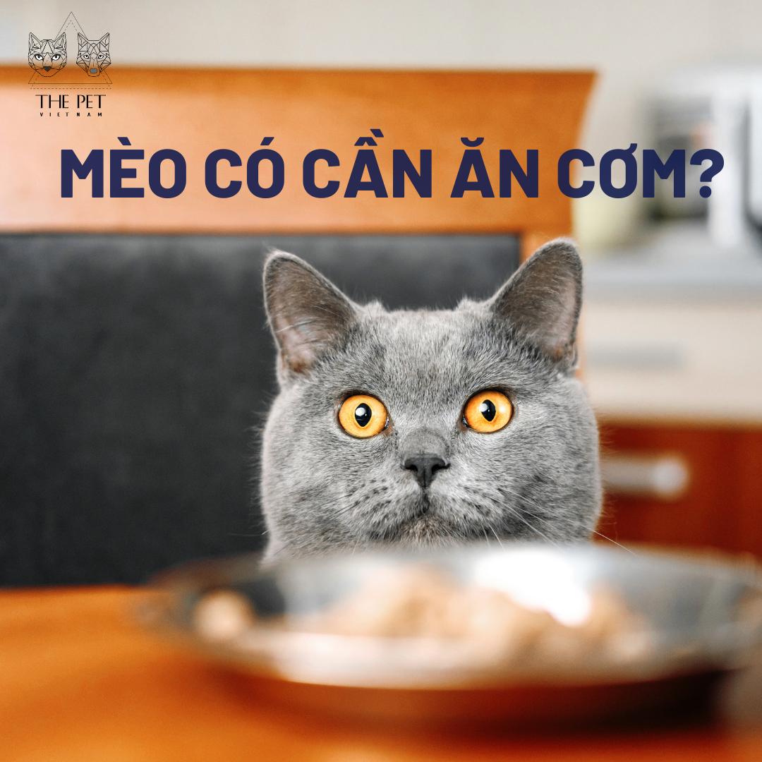 Liệu cho mèo ăn cơm có tốt không?
